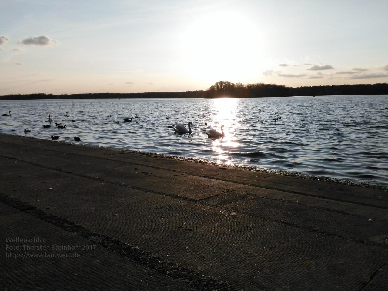 Abenddämmerung am Tegeler See mit Wasservögeln