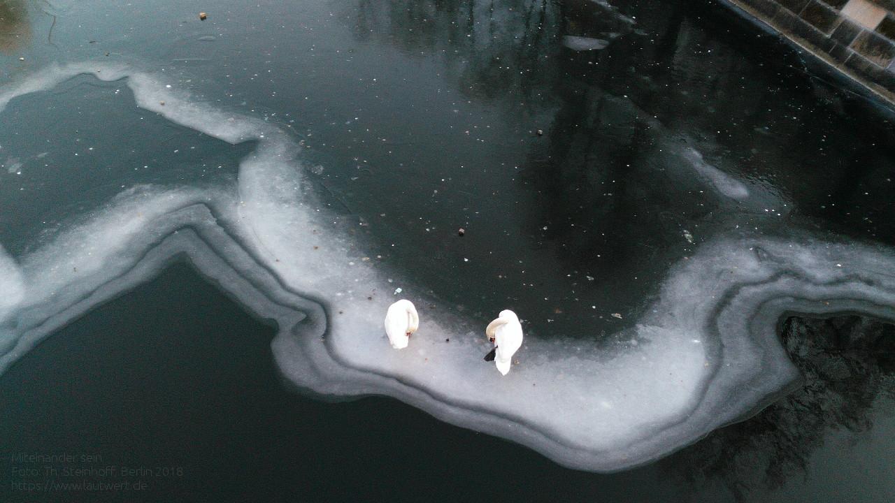 Schwanenpaar auf dem vereisten Landwehrkanal