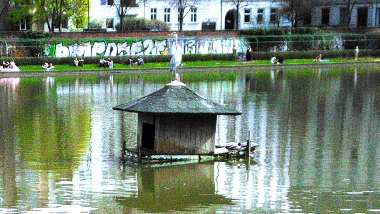 Reiher auf dem Engelbecken in Kreuzberg