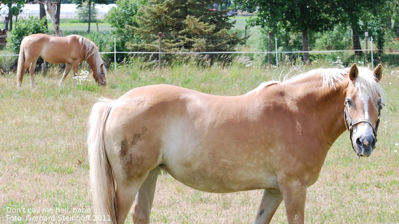 Helles Pferd mit weiterem Pferd im Hintergrund