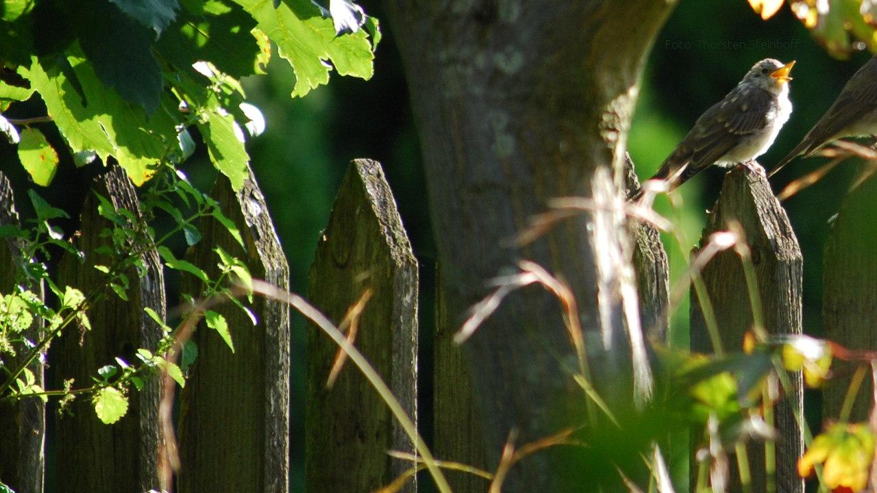 Singvogel auf Baumzweig