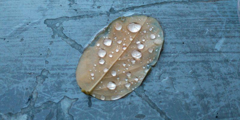 Herbstblatt mit Tautropfen