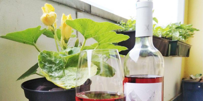 Rosé mit blühendem Balkon-Kürbis